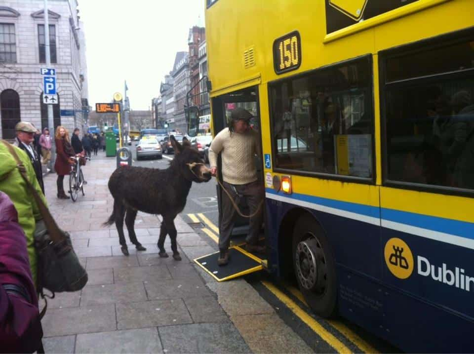 So you are saying I can't bring the donkey on the bus? Irish One Liner Jokes