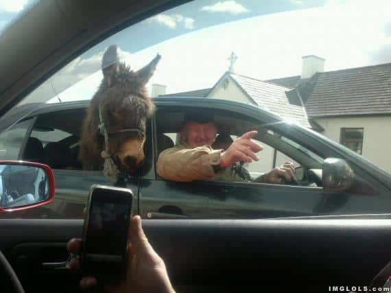 Just a man with a donkey in the back of his car