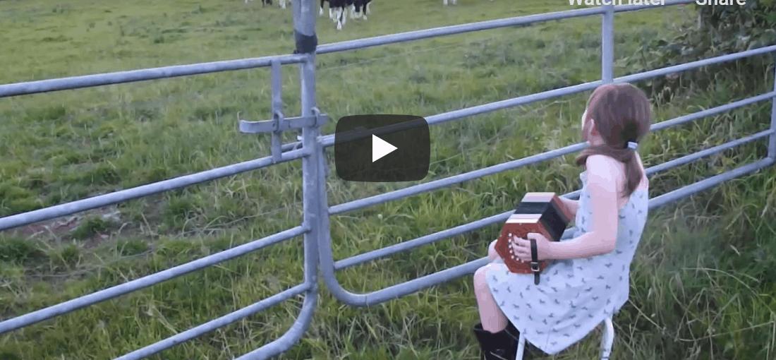 Irish cows line up for some Irish dancing