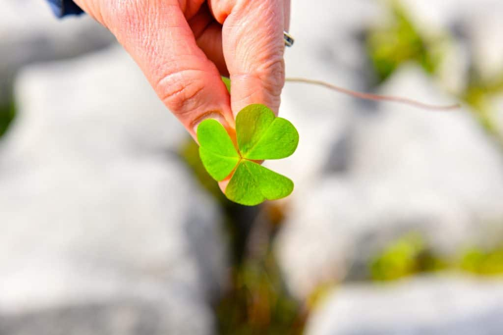 St Patricks day facts - It was not always green