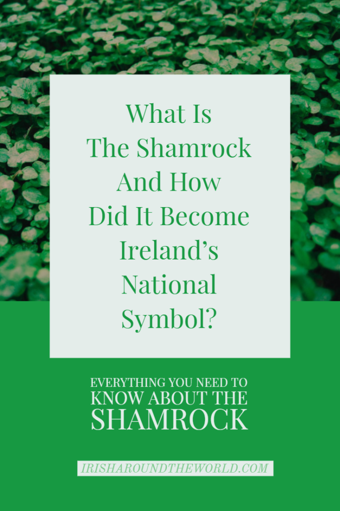 What Is The Shamrock And How Did It Become Ireland's National Symbol