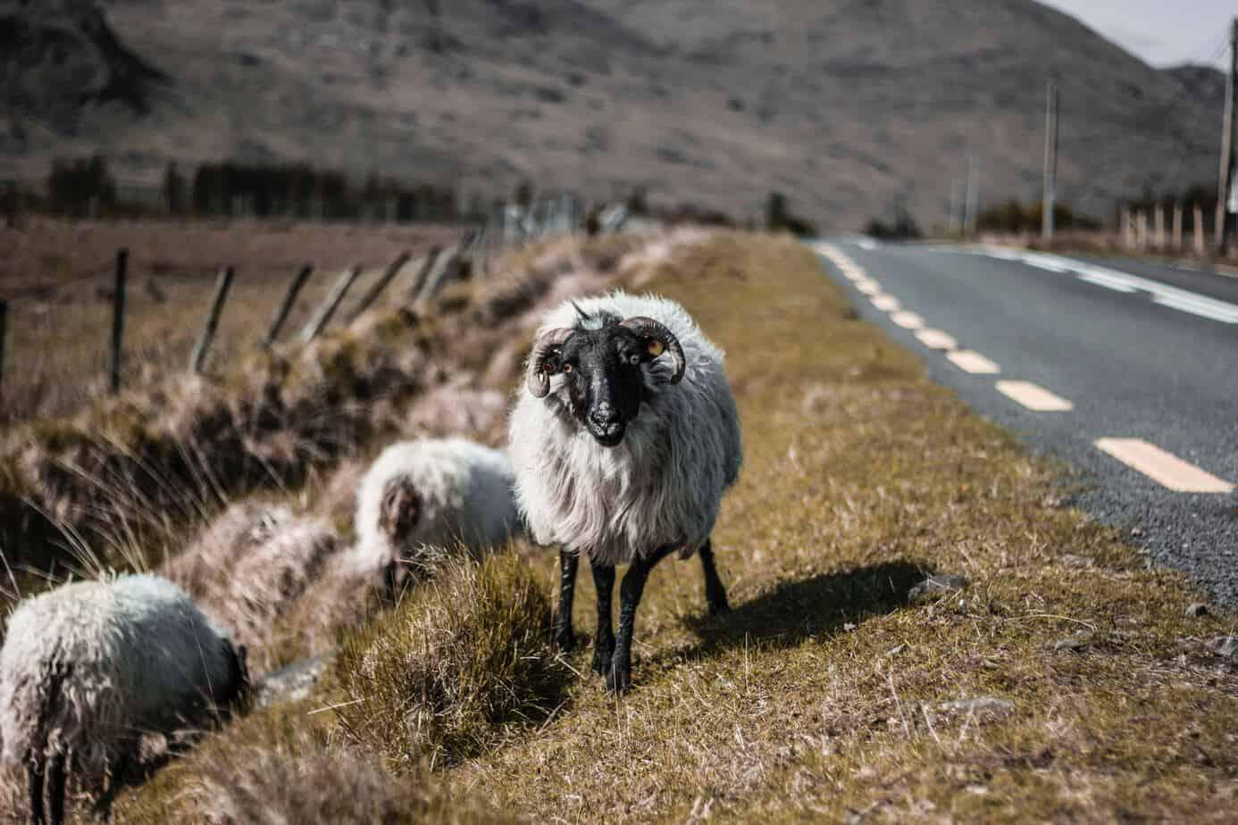Irish Road Trips The Ring Of Kerry