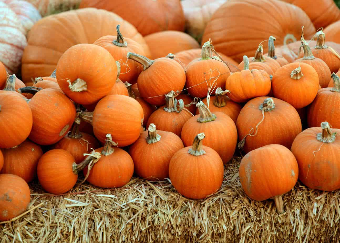 5 facts about halloween you didn't know
