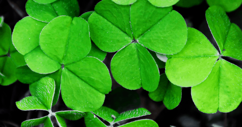 100 Best Irish Sayings For St Patrick's Day | Irish Blessings And Proverbs