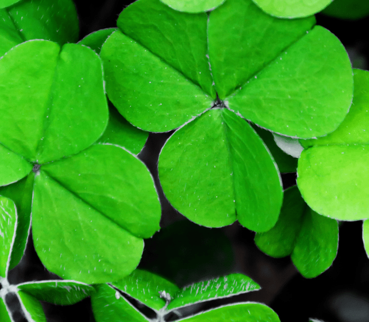 St Patrick's day Irish sayings for your health