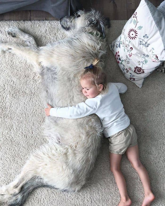 Lincoln the Irish wolfhound with a small baby.