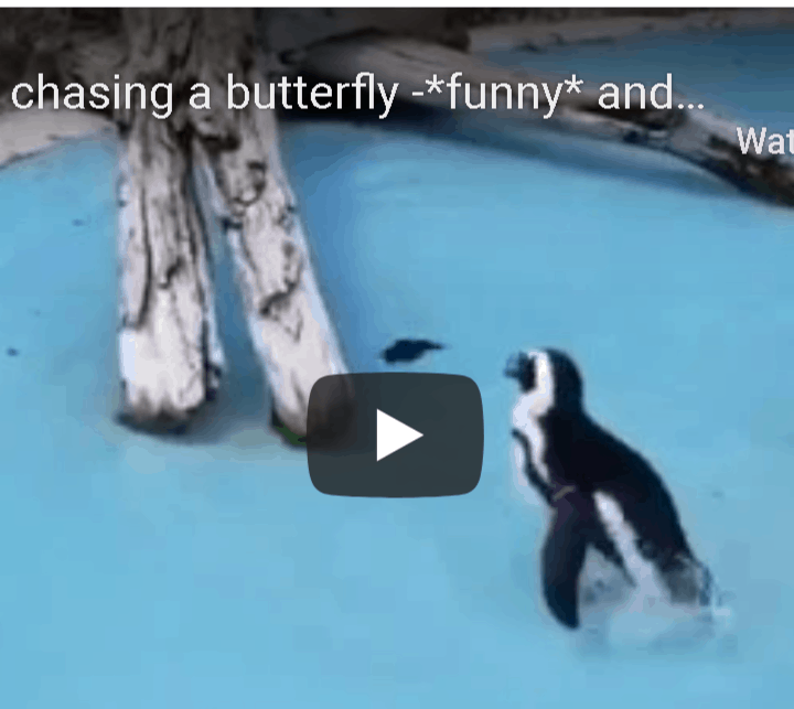 penguin chasing a butterfly