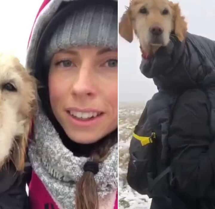 Dog rescued from mountain
