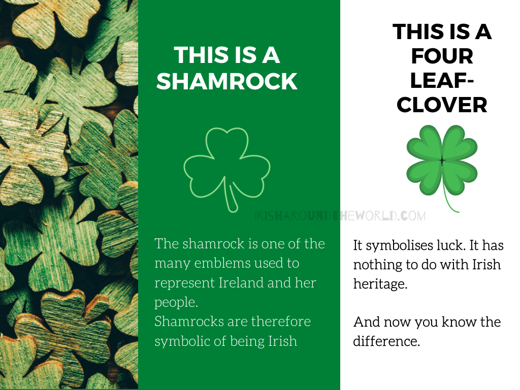 Shamrock vs four leaf clover the differences
