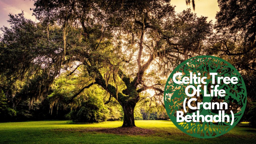 Celtic Tree Of Life(Crann Bethadh)  Tree of Life Celtic Symbol - Image