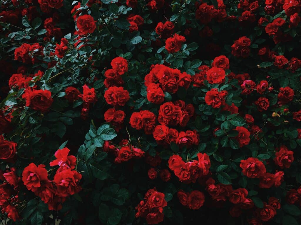 """June"" – An Incredible Poem By Francis Ledwidge"