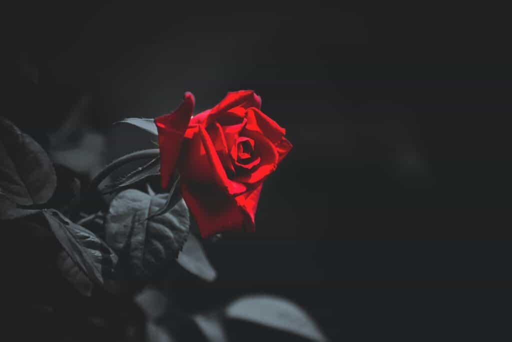 Irish Poem: I See His Blood Upon The Rose, By Joseph Mary Plunkett