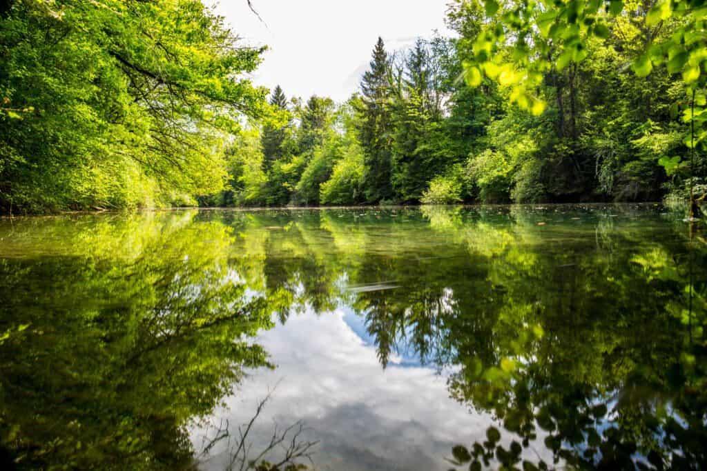 Death Of A Naturalist By Seamus Heaney – Top Irish Poem