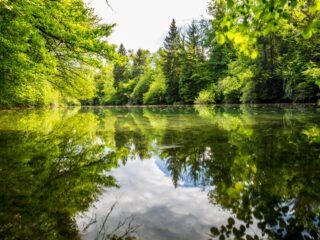 Death Of A Naturalist By Seamus Heaney - Top Irish Poem